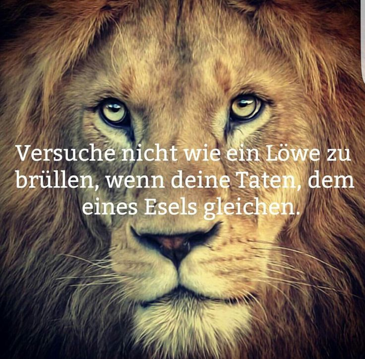 #Versuche nicht wie ein #Löwe zu brüllen.,
