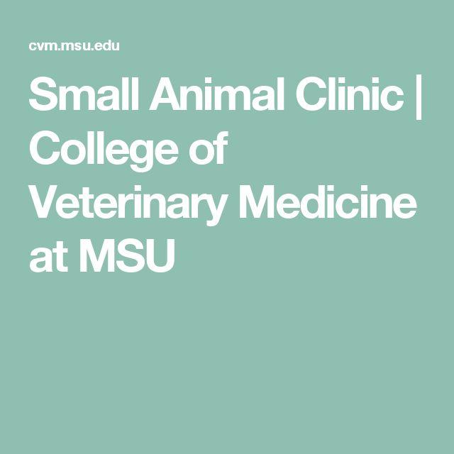 Small Animal Clinic | College of Veterinary Medicine at MSU
