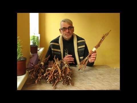 (24) Как сохранить до весны виноградные черенки? - YouTube