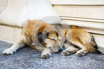 Stray dog sleeping on the steps of a building.