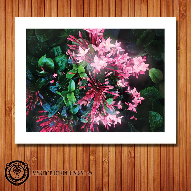 Bouvardia Flowers - 14x11 - Psychedelic - Giclee Art Print by MysticPhotonDesign on Etsy