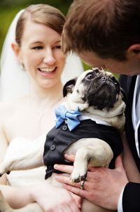 I would totally be OK with this if my husband wanted to make his/our dog the ring barer (barrier?) at our wedding :)