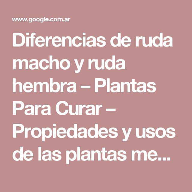 Diferencias de ruda macho y ruda hembra – Plantas Para Curar – Propiedades y usos de las plantas medicinales