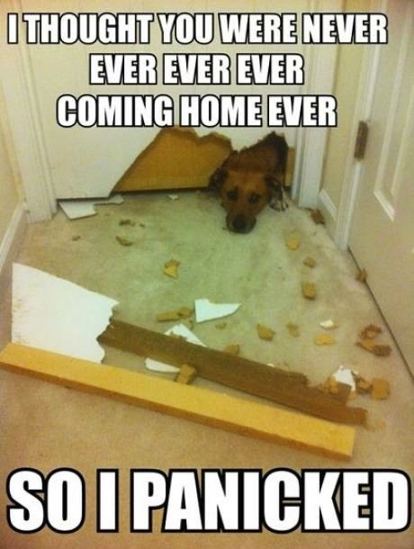 This is soooo my dog, Roscoe. Gone for 5 min and he's freaking out...lol