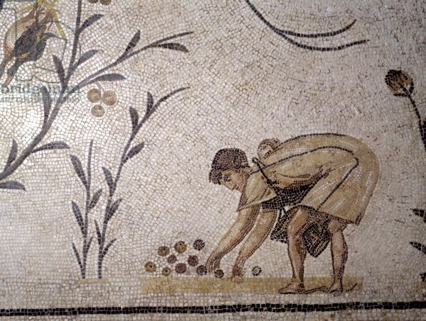 A woman gathering fallen fruit, from La Chebba, 2nd-4th century (mosaic). Roman / Musee National du Bardo, Le Bardo, Tunisia / Ancient Art and Architecture Collection Ltd. / The Bridgeman Art Library