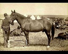 Comanche the ONLY survivor of Custer's last stand. He was trapped out in his 7th calvary duds for parades but never ridden again. He was treated as a honored vet til the day he died.