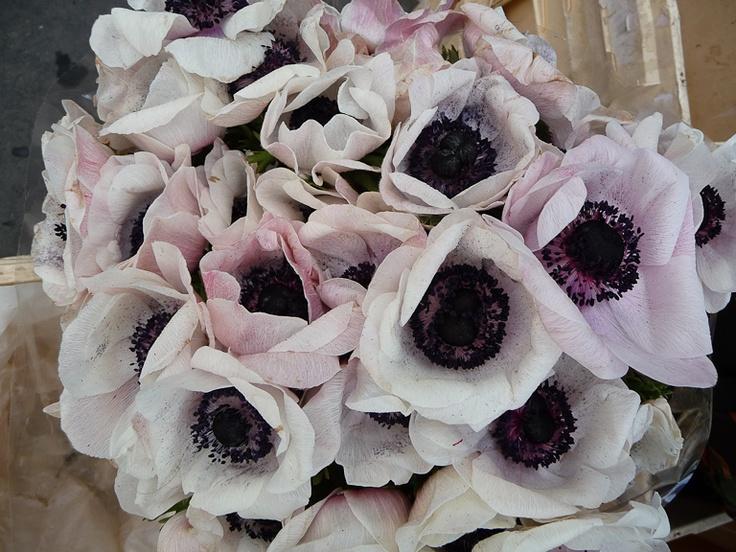 Bouquet d an mones chez les fleuristes la belle saison c for Fleuristes et fleurs
