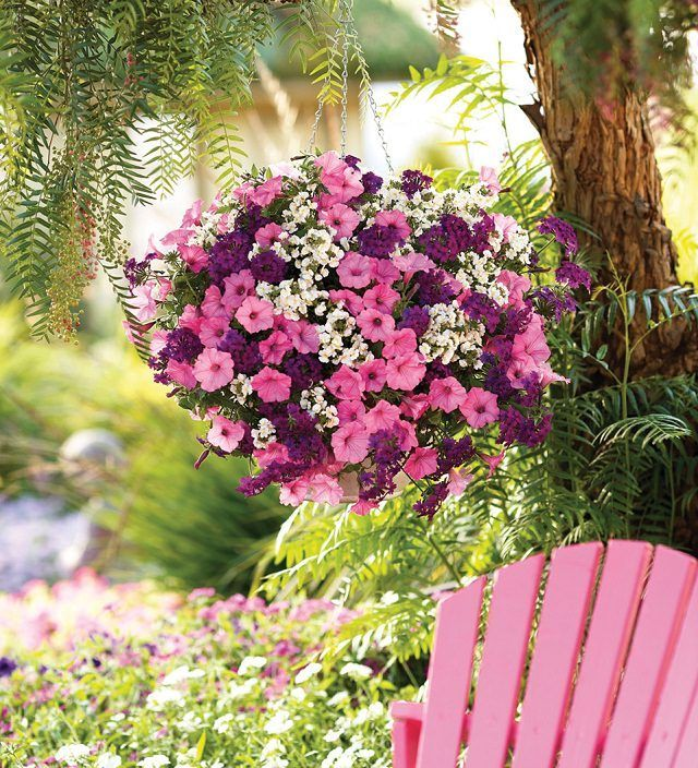 Hanging Flower Baskets 5 Secrets The Pros Use Plants For