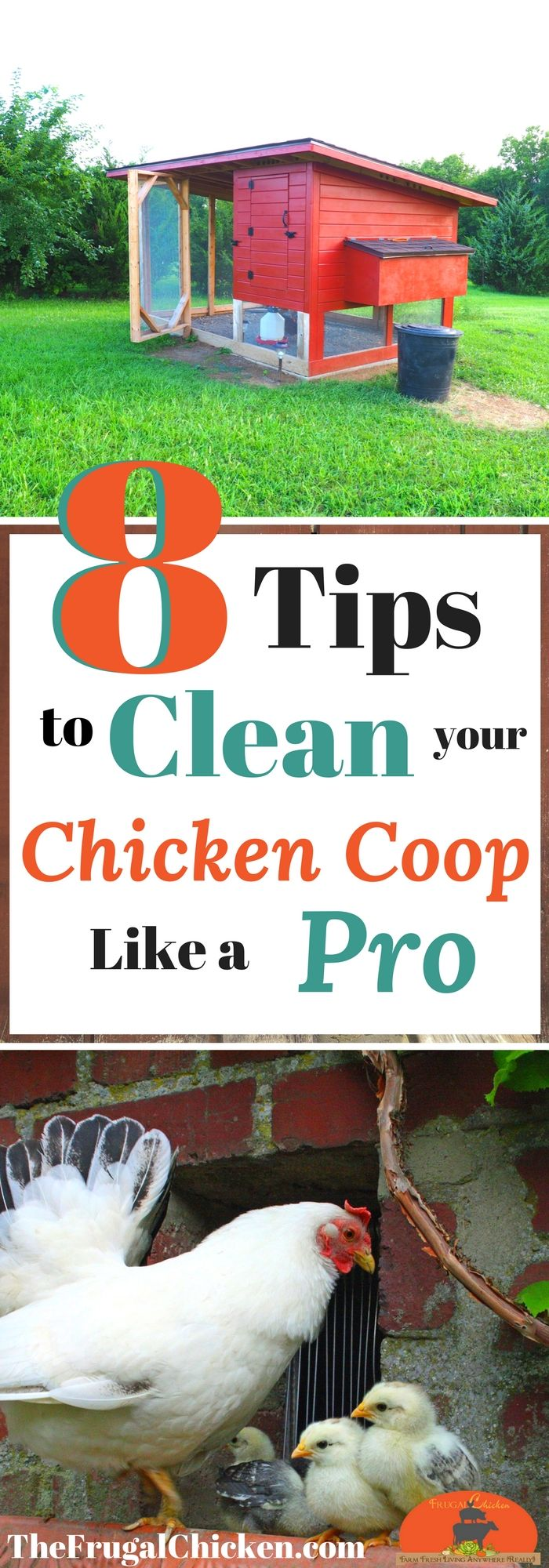Chickens poop and you have to clean it up! Here's pro tips to get your coop super clean!