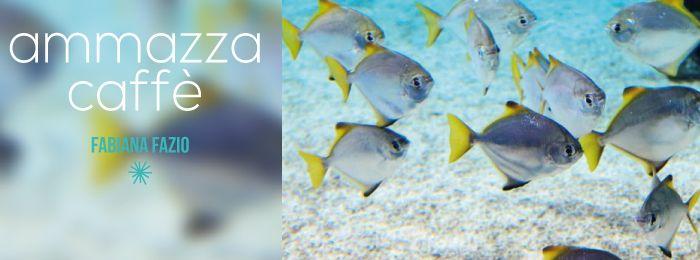 """Chi dorme non piglia pesci. I pescatori sono svegli e prendono pesci. Tanti pesci. In tante reti. """"Reti fotocopia di altre reti. Presentatori fotocopia di altri presentatori che presentano ospiti fotocopia di altri ospiti in programmi fotocopia di altri programmi all'interno di palinsesti fotocopia di altri palinsesti decisi da partiti fotocopia di altri partiti fatti …"""