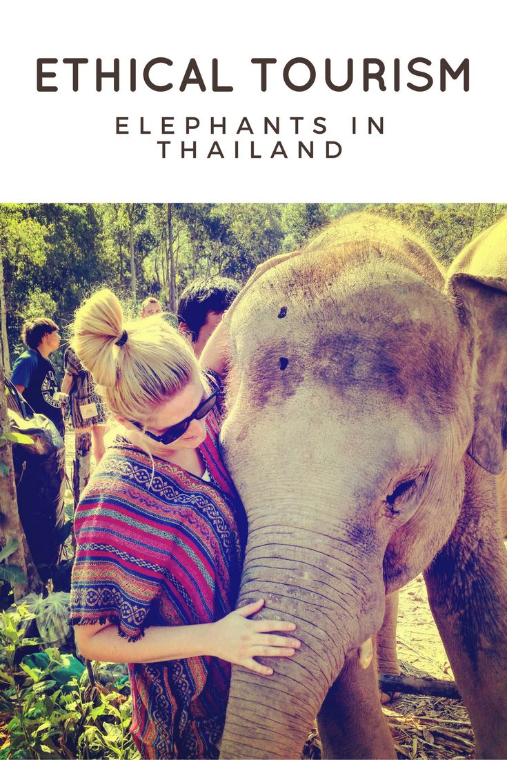 ethical tourism in Thailand - elephant sanctuaries, and why you should never ride an elephant