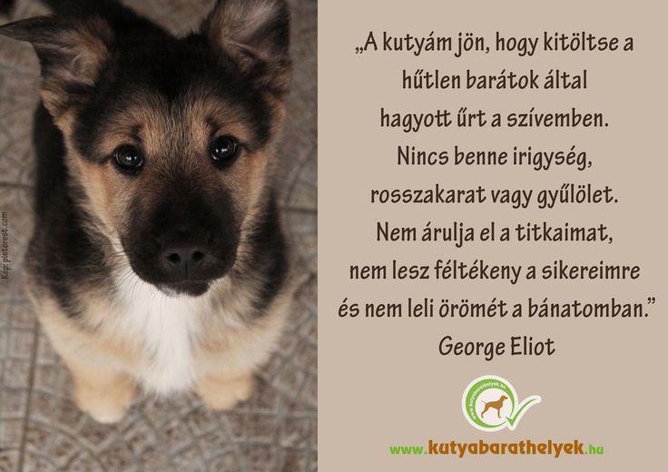 """""""A kutyám jön, hogy kitöltse a hűtlen barátok által hagyott űrt a szívemben. Nincs benne irigység, rosszakarat vagy gyűlölet. Nem árulja el a titkaimat, nem lesz féltékeny a sikereimre és nem leli örömét a bánatomban.""""( Eliot, George )  #kutya #idézet #quotes #dog #kutyabaráthelyek #georgeeliot #kutyásidézet"""