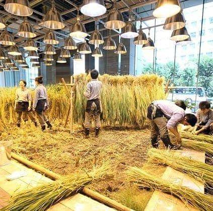 Ada padi ditanam di dalam ruangan!  Di tengah hiruk pikuk Tokyo sebuah perusahaan bernama Pasona berinisiatif melakukan penghijauan. Penghijauan tak hanya terjadi di luar bangunan 20% ruang di dalam bangunan dijadikan fasilitas pertanian. Yang ditanam pun beraneka ragam dari sayuran buah hingga padi. Ya tanaman padi tumbuh subur di lobi utama kantor. Keren ya? . . . #IndmiraPic #Indmira #hydroponics #aquaponics #aqua #plantation #organicproducts #urbanfarming #vertikultur #verticalfarming…