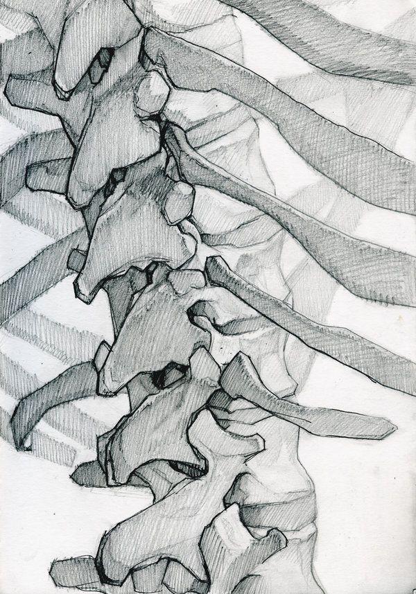 Skeleton Study 4 by jamesjulier on DeviantArt