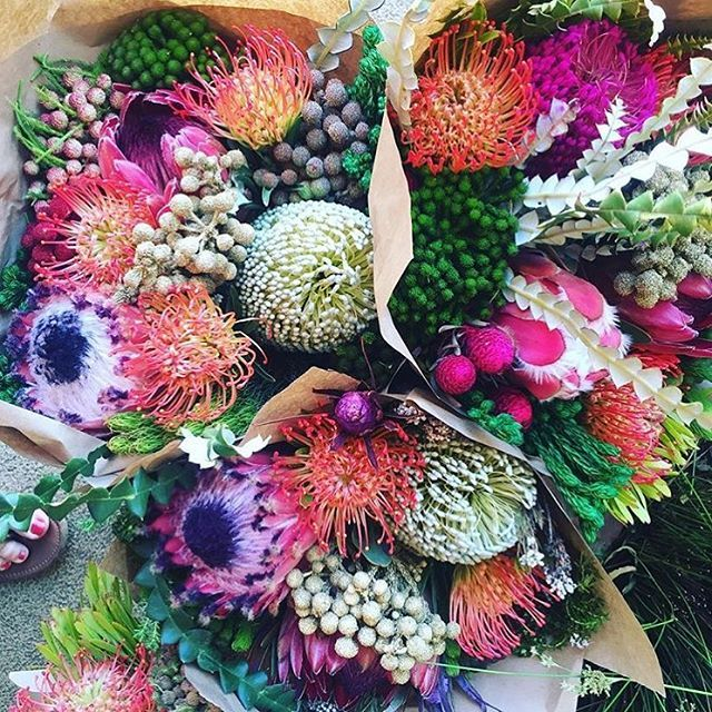 Proteas & Fynbos via @kamersvol on Instagram