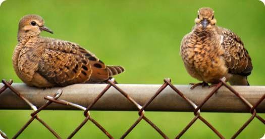 dove symbolism - photo by Avia Venefica