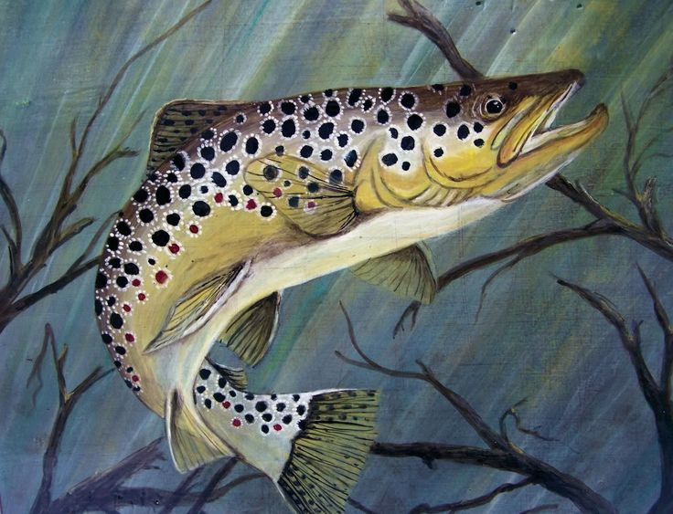 Big Brown Trout Paintings | Trout Paintings - Little River Outfitters Forum