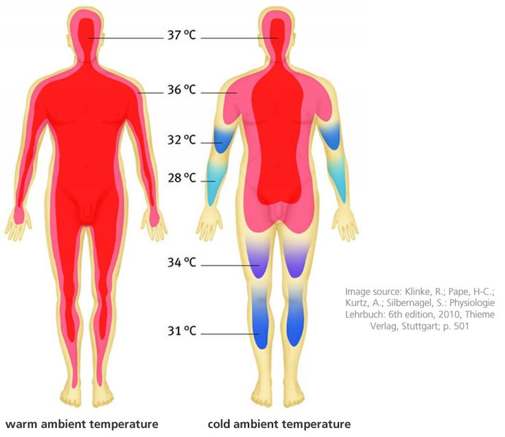 Living things maintain a stable internal environment. As the temperature outside changes, the body maintains its temperature. Homeostasis