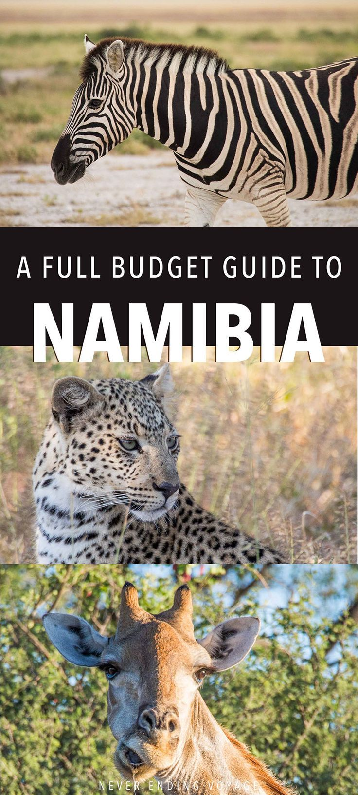 We're breaking down our budget for 2 weeks in Namibia! It's definitely NOT a cheap country, but here are some ways we cut costs while enjoying all its gorgeous desert landscapes, safaris, and more. #namibiatravel #namibiadesert #africatravel