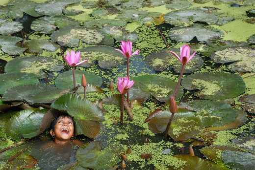 By Prasanta Biswas  At the Indian village pondVillage Ponds, Beautiful Photos, Indian Village, Awards Photos, Awards Win, Beautiful Awards, Colours Photography, Water Lilies, Win Photos