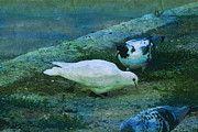 "New artwork for sale! - "" Pigeons Dove White Dove Pigeon  by PixBreak Art "" - http://ift.tt/2lDIAZu"