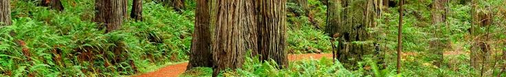 Redwood National Park - You can travel by car to Gold Bluffs Beach to hike along a meandering stream through a hidden canyon with 30-foot walls covered by several species of ferns. Follow steps up to James Irvine Trail to a prairie that was once a small mining town above Fern Canyon.