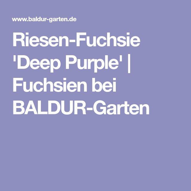 Riesen-Fuchsie 'Deep Purple' | Fuchsien bei BALDUR-Garten
