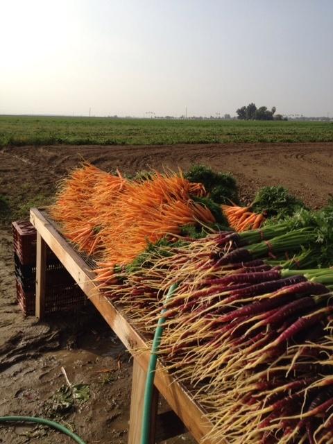 Weiser Farms :: Tehachapi, CA