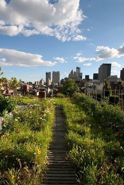 Manhattan-based designers Chris and Lisa Goode restored a dilapidated building in Little Italy, working with architect Andrew Berman to build a penthouse apartment with a 6,000-square-foot green roof garden, including a lawn, rose bed, trees, and a vegetable garden in back of the kitchen.:
