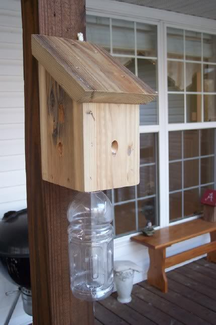 carpenter bee trap - gatorade bottle at bottom, holes drilled upward at a 45 degree angle on the sides.  Hope it works