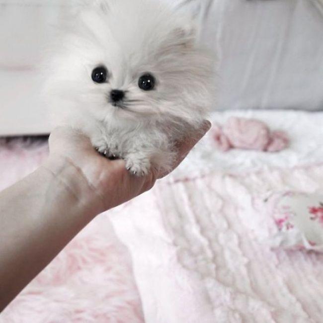 25 αξιολάτρευτα μωρά ζώα που κυριολεκτικά.. χωρούν στη παλάμη του χεριού σας | Anonymoi.gr