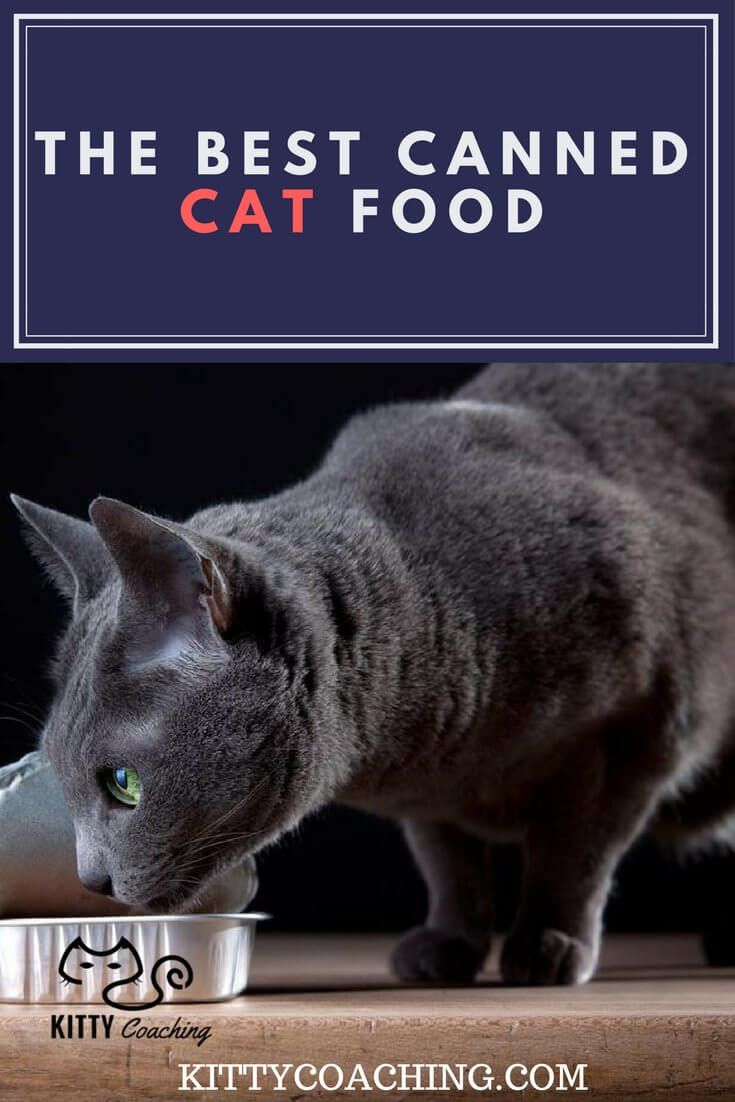 The 9 Best Wet Cat Foods Reviewed 2018 Wet Cat Food Best Cat Food Cats