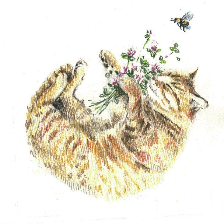 Red-headed cat, sleep, clover, bumblebee, bee, сolour pencils, graphic, illustration, draw, рыжая кошка, кошка спит клубочком, клевер, шмель, пчела, графика, иллюстрация, цветные карандаши.
