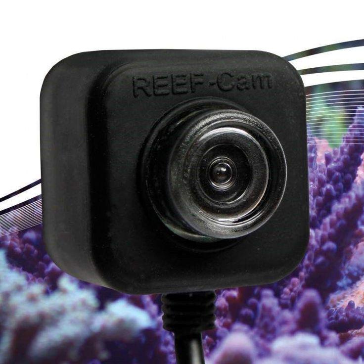 Other Fish and Aquarium Supplies 8444: Icecap Reefcam Underwater Aquarium Video Camera -> BUY IT NOW ONLY: $249.99 on eBay!