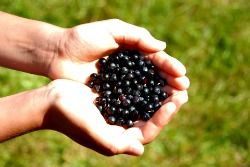 Experiment with these simple Huckleberry recipes!