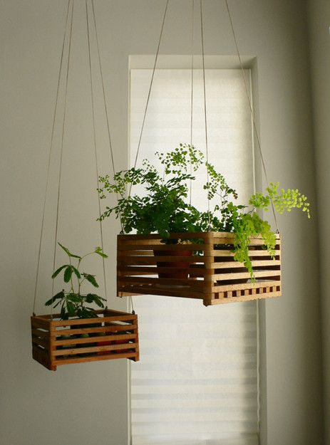 Hanging plants – Little Chicago Bungalow