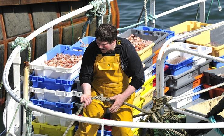 Retour des Pêcheurs au port du Guilvinec - Finistère - Bretagne - Louis Bourdon