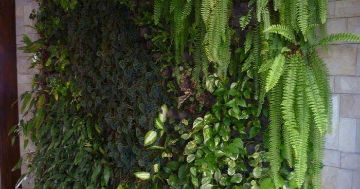 Nueva tendencia en paisajismo                 Jardines verticales: paredes tapizadas con plantas naturales  Es una técnica que permite apro...