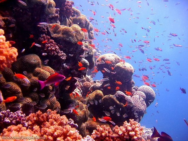 Anthias and Coral | Flickr - Photo Sharing!