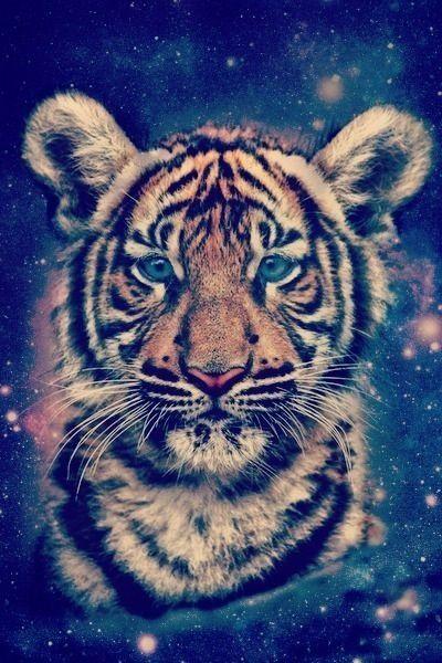 Baby tiger galaxy wallpaper   Wallpapers   Pinterest ...