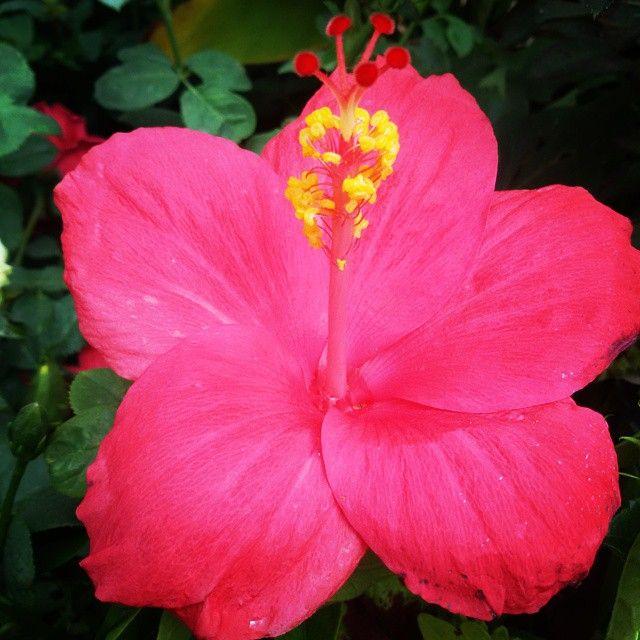 #flowers #flower #TagsForLikes #petal #petals #nature #beautiful #love #pretty #plants #blossom #sopretty #summer #flowerstagram #flowersofinstagram #flowerstyles_gf #flowerslovers #flowerporn #botanical #floral #florals #insta_pick_blossom #flowermagic #