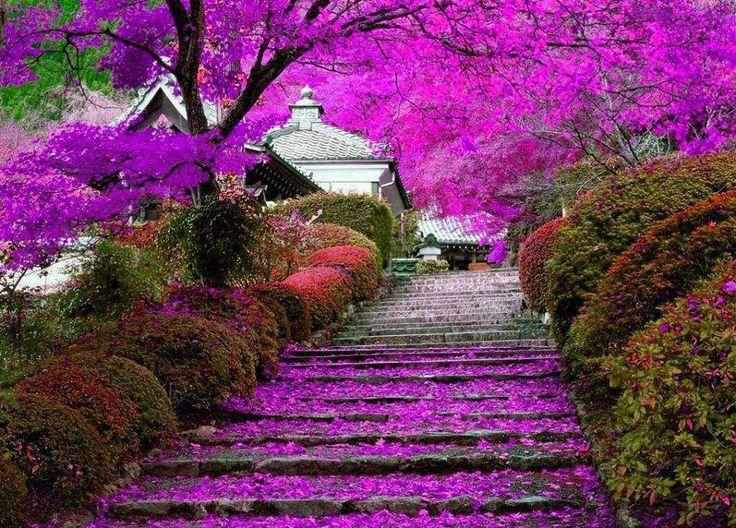 Japan Garden Flowers: Garden Staircase, Kyoto, Japan