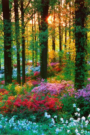 oh, the colors.: God, Walks, Magic Forests, Woodland Gardens, Colors, Beautiful, Trees, Places, Flowers