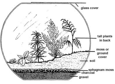 how to build a terrarium with succulent plants - Google Search