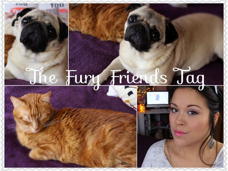 ♡ The Furry Friends Tag ♡ The Story Of My Pets