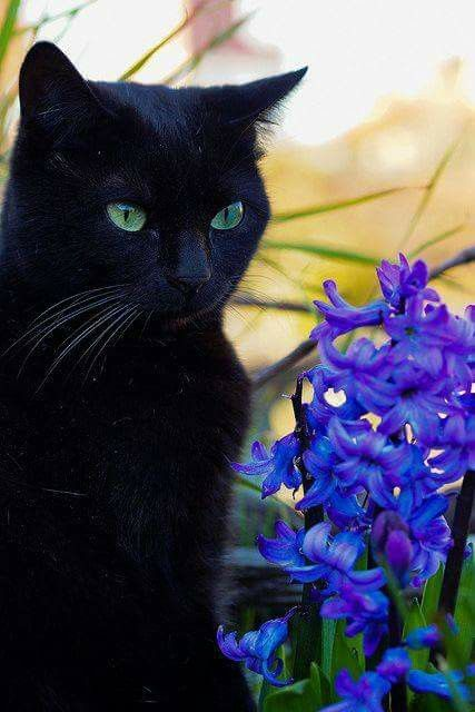 Cat and hyacinth