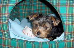 Best 20 Dog Activities Ideas On Pinterest Diy Dog Toys