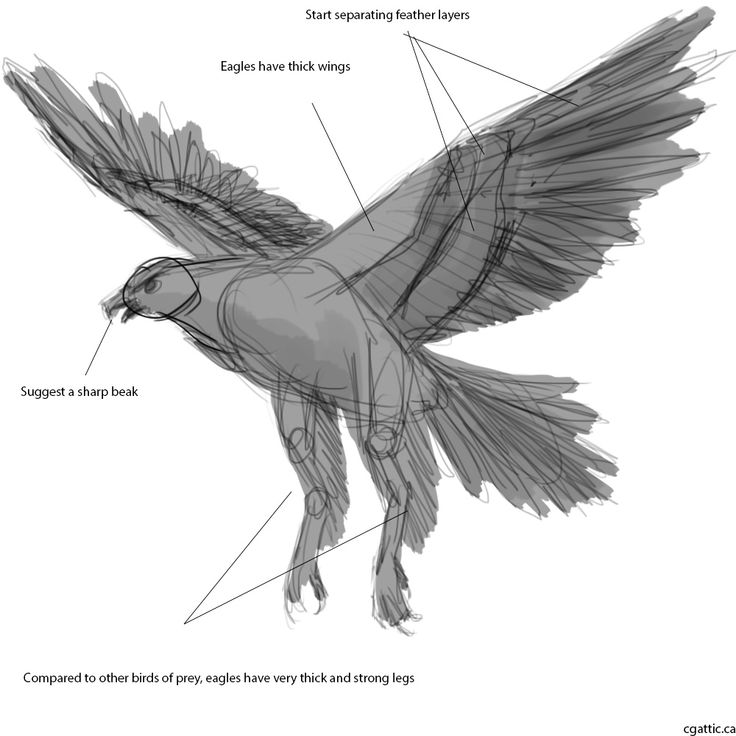 How to draw a eagle face step by step