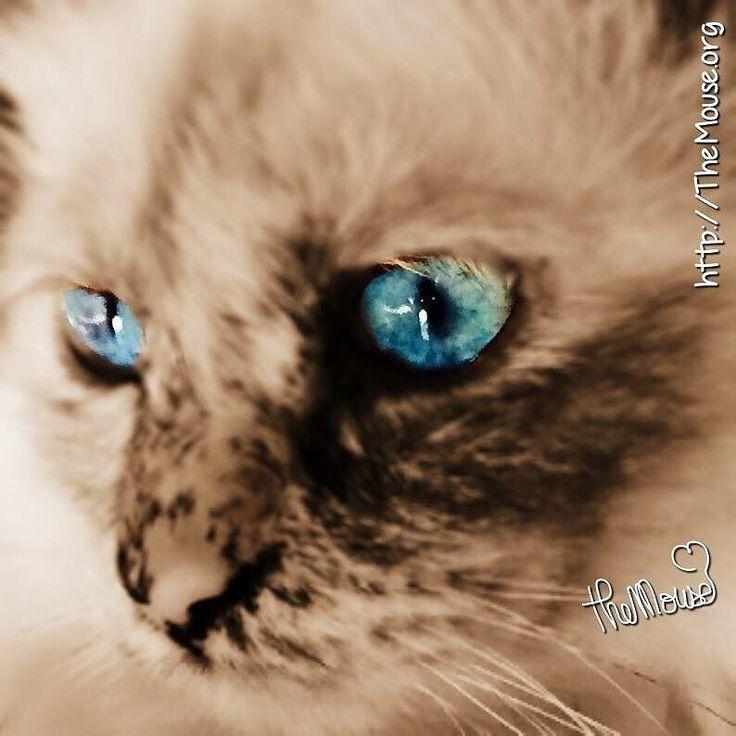 The 25+ best Le ciel est bleu ideas on Pinterest   Photographie ...