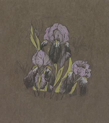 Gustave Baumann, Irises (graphite and tempera on brown wove paper)Irises Graphite, Iris Graphite